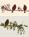 Birds silhouettes  on the branches Stock Images