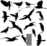 Birds silhouettes collection ornitology