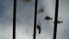 Birds stock video