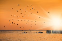 Birds silhouettes flying above the lake. Against sunset Stock Image