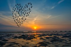 Birds silhouettes flying above the sea against sunrise in the fo Royalty Free Stock Image