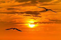 Birds Silhouettes Flying royalty free stock photos