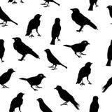 Birds Silhouettes Seamless Pattern Background. Vector Illustration EPS10 Stock Photos