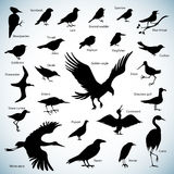 Birds silhouettes. Set of birds silhouettes on abstract background Stock Photography