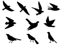 Birds silhouettes set. Set of silhouettes of flying and sitting birds Royalty Free Stock Photography