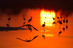 Birds silhouettes at sunset Royalty Free Stock Photos