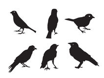 Birds Silhouettes  on White Vector Stock Photos
