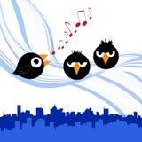 Birds singing Stock Photography