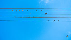 Birds singing and forming music tune on power lines in Sithonia Stock Photos