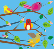 Birds singing - spring Royalty Free Stock Image
