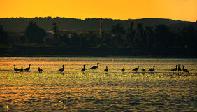 Birds in Single File . A silhouette of Birds in Single File at the city of Aswan south of Egypt Royalty Free Stock Photography
