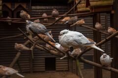 Birds sit on branches in an artificial aviary
