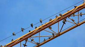 Birds sit on a yellow crane. Jib and clean the plumage stock video