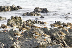 Birds siting on th cost of Indian Ocean Stock Photos