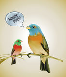 Birds sitting on a branch. An illustration of two colorful birds Stock Photo