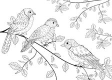 Birds sitting on a branch Royalty Free Stock Photo