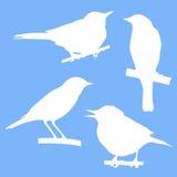 Birds sitting on branch tree Stock Photos