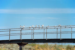 Birds sitting on a bridge Stock Images