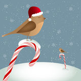 Birds sitting on candy cane Royalty Free Stock Photo