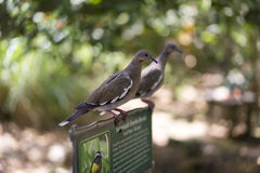 Birds sitting on a notice board in a park Royalty Free Stock Image