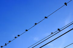 Birds sitting on power line Royalty Free Stock Photography