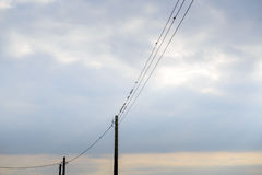 Birds sitting on power lines Royalty Free Stock Image