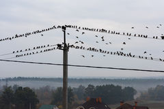 Birds sitting on power lines Stock Photo