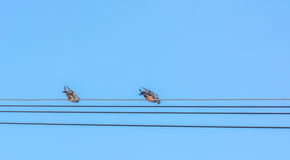 birds sitting on power lines over clear sky Royalty Free Stock Photos
