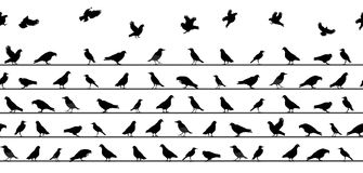 Birds Sitting on Power Lines. Seamless Pattern. Vector  Royalty Free Stock Photo