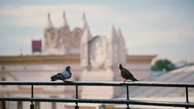 Birds sitting on a roof parapet in sunny day. View to the Minsk city. Pigeons fly on a roof. Architecture on a background stock footage