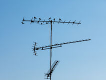 Birds sitting on the television antenna against a blue sky Royalty Free Stock Image