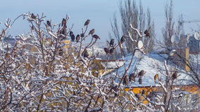 Birds sitting on the tree branch covered by snow Stock Image