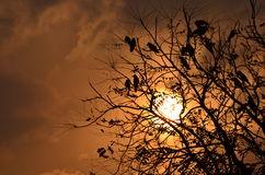 Birds sitting on tree after long day with sunset and pretty colorful sky in the backdrop Royalty Free Stock Photography