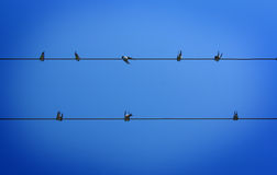 Birds sitting on the wire Royalty Free Stock Photography