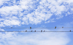 Birds  sitting on a wire Royalty Free Stock Image