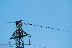 Birds sitting on wire of power line Royalty Free Stock Images