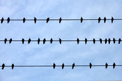 Birds sitting on wires Stock Photo