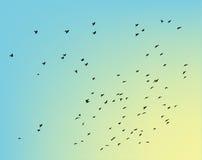 Birds in sky Stock Image