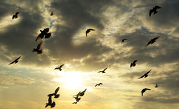 Birds in sky stock image