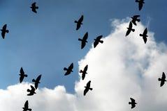 Birds in the sky. Flight of birds in the dark blue sky Royalty Free Stock Photography