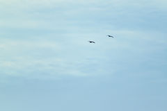 Birds on the sky Stock Photography
