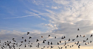 Birds in the sky. Birds in flight agains a cloudy sky royalty free stock images