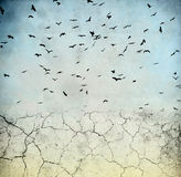 Birds in the sky. Ground cracked, birds in the sky Stock Image