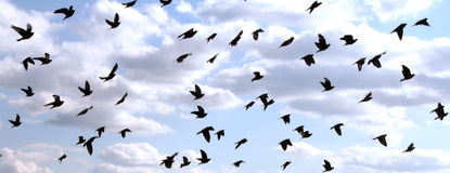 Birds in the Sky Stock Photo