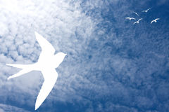 Birds at the sky Royalty Free Stock Image