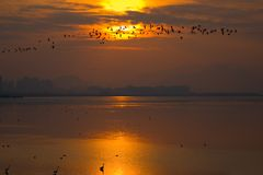 Birds in the sky. Birds cross the sky on sunset Royalty Free Stock Photography