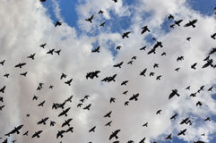 Birds in the sky Royalty Free Stock Images