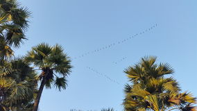 Birds in the sky Royalty Free Stock Photos