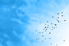 Birds in the sky. Birds flying in the blue sky Stock Images