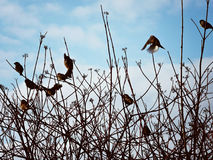 Birds in the sky Stock Photography